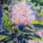 Hemlock and Rhododendron *
