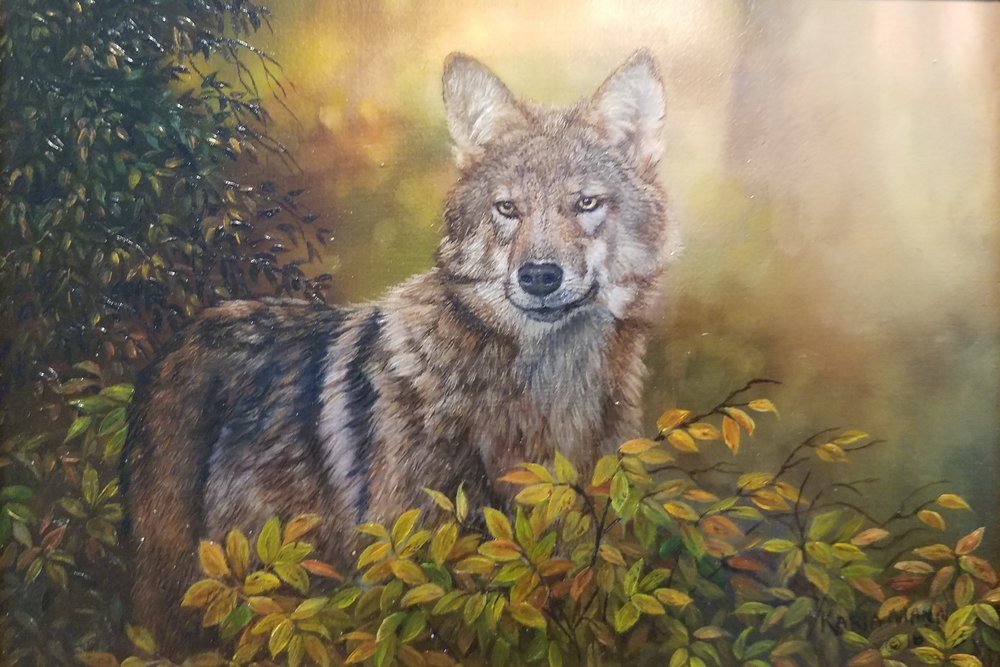 Autumn Coyote *