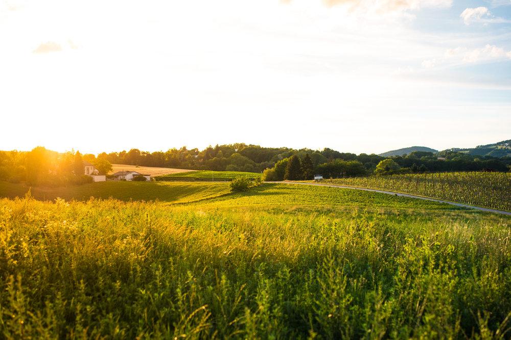 landschaft_.jpg