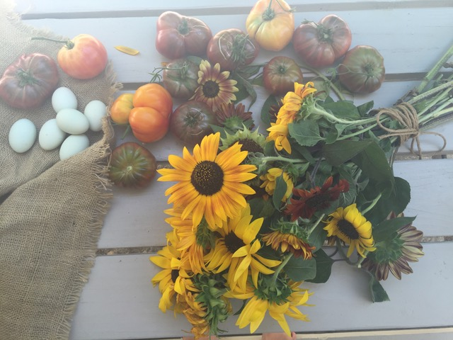 Backyard bounty! Fresh eggs, juicy tomatoes and bright sunflowers!