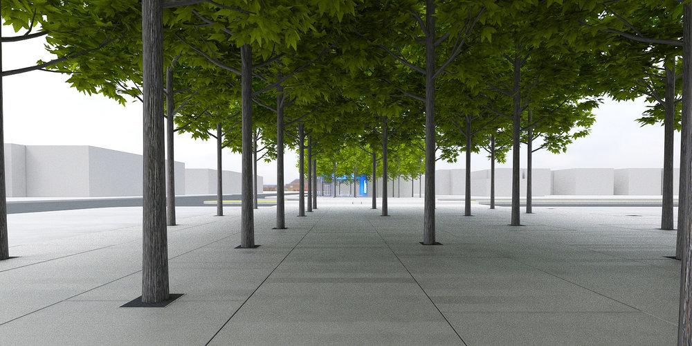 Eglinton Crosstown LRT DX - Urban Realm Tree Grove