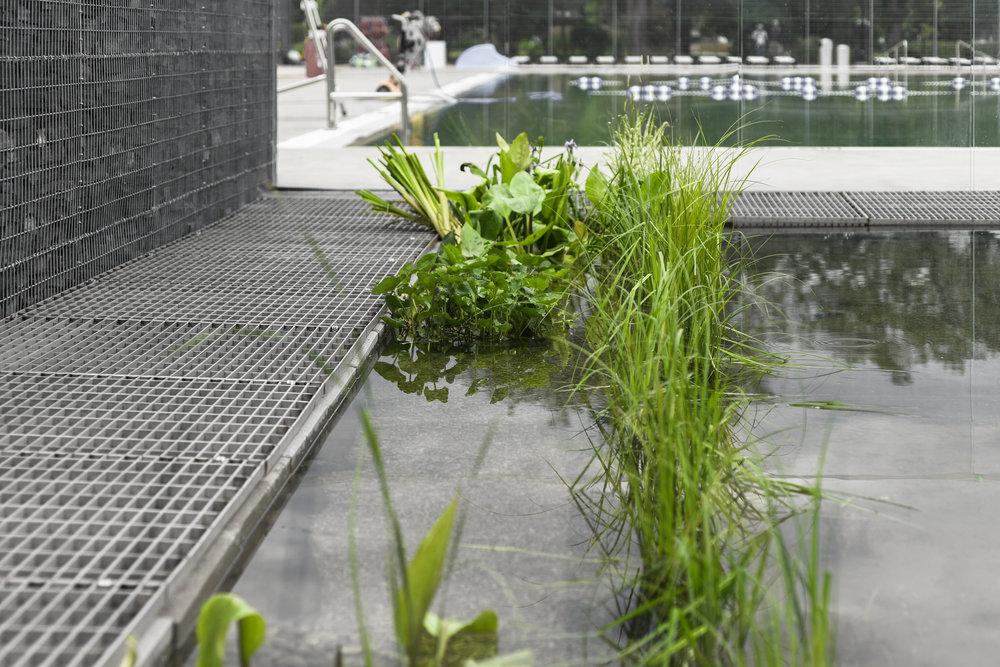 gh3 - Borden Park Natural Swimming Pool - Hydrobotanic Pond Deta