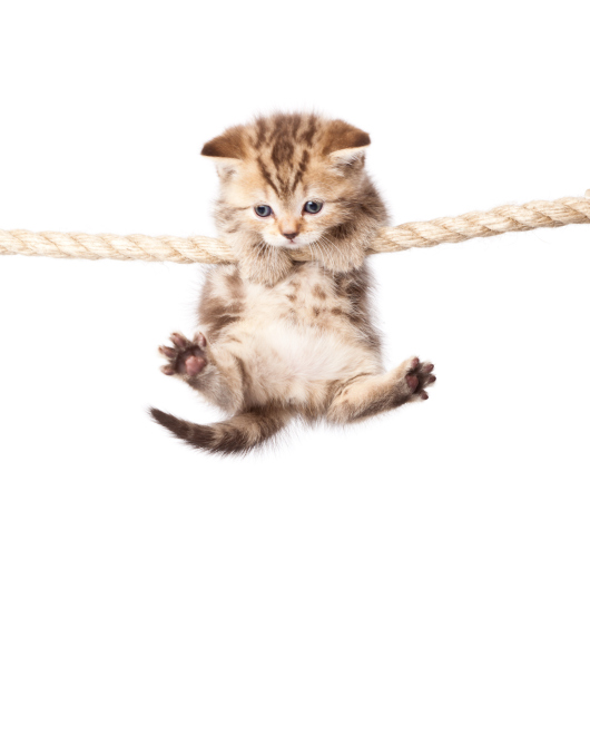 Kitten Rope Climb