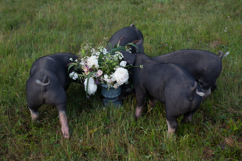 Stitchdown Farm pigs flower arrangement