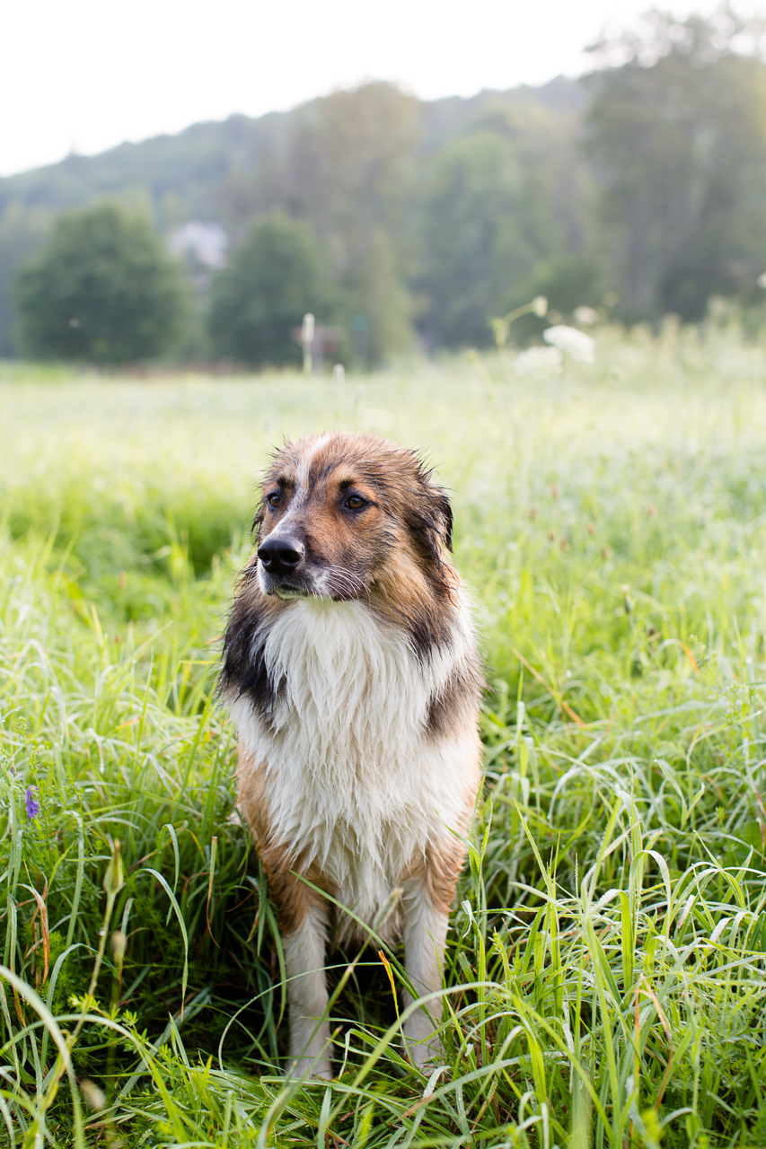 Magnus the English Shepherd