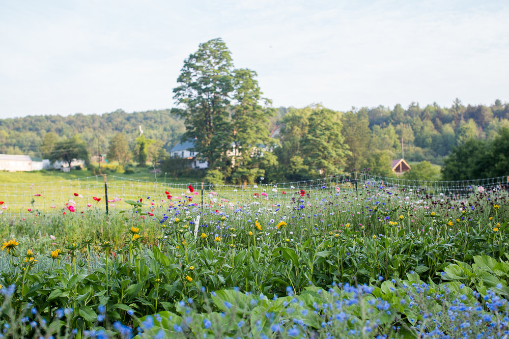 Stitchdown Farm diversified nutrient dense vermont flowers