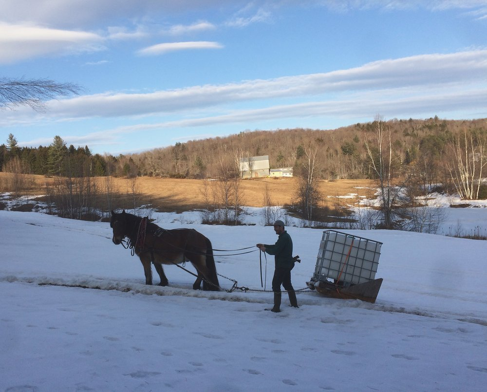 Horse Powered Vermont Maple Syrup