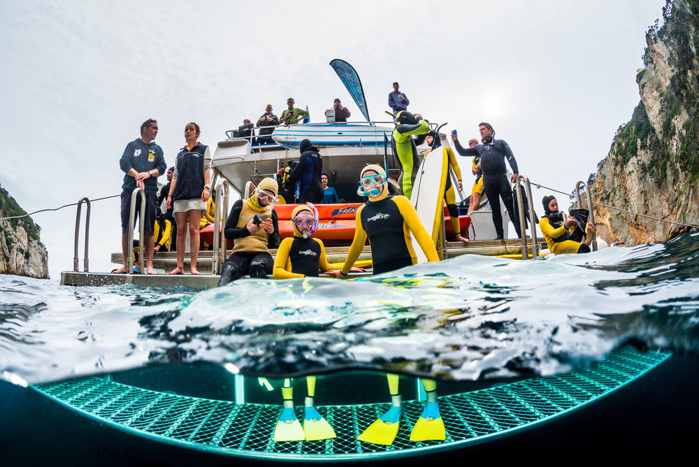 dive training and education