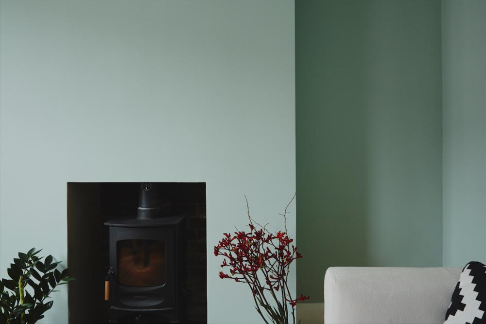Living Room - Zeezee plant and Kangeroo's Paw