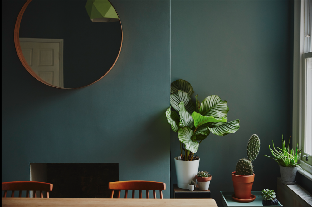 Dining room - Plant selection of Calathea, Aloe Vera, Cactus and Succulents. Wall colour, Farrow & Ball, Oval Room Blue. Dining table from Unto to This Last. Mirror from Ikea.