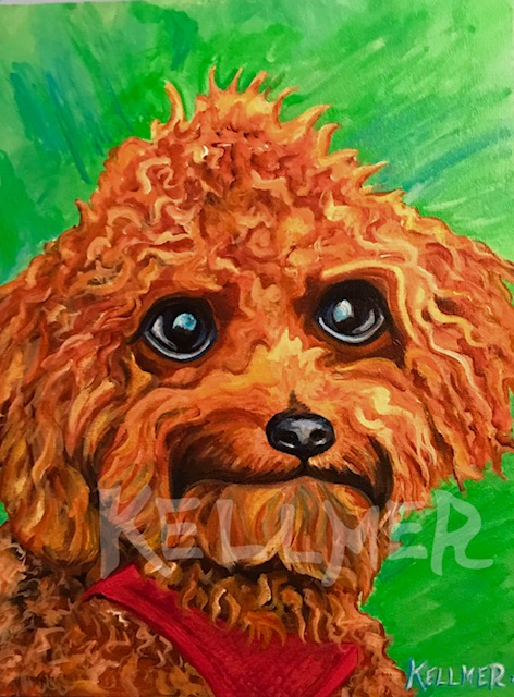 C.J. The Toy Poodle