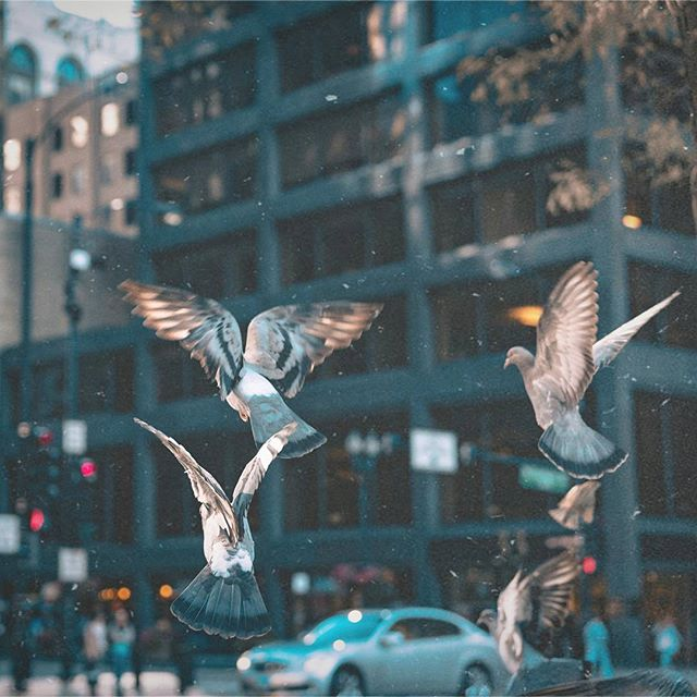 Image by @certaidepth 🎇  #chicago #chicagomarketingsolutions #marketingfirm  #igersmood #igmasters #eclectic_shotz  #streetframe #streetactivity #streetleaks #way2ill #thecreativeshots #folkvibe #folkcreative #folkgood #vscogood_ #vsco #vzco #ig_masterpiece #streetdreamsmag #ig_color  #streets_vision #urbexpeople #urbangathering #MobileMag #highsnobiety #estheticlabel #Artofvisuals  #exploretocreate #gramslayers #rainstations