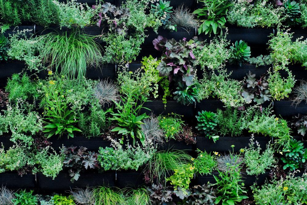 TUCKER Living Wall, Vertical Garden / URBN Outfitters Philadelphia
