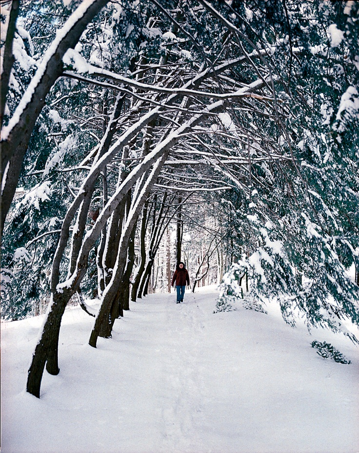 fe00d02d7aa25d752294c1f72154b0f2--winter-walk-in-the-winter.jpg