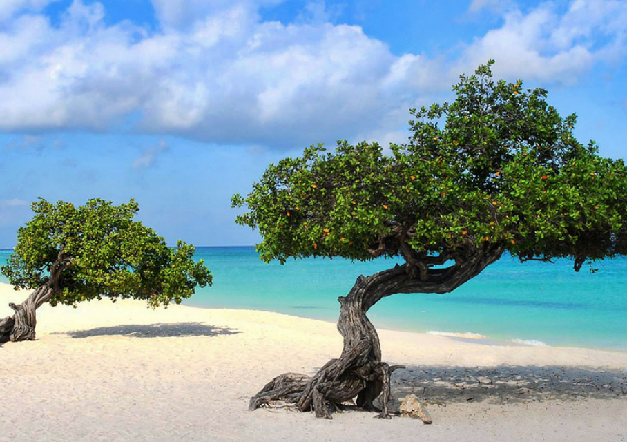 YOGA SHANTI 200-HOUR FALL INTENSIVE(in Noord, Aruba) -