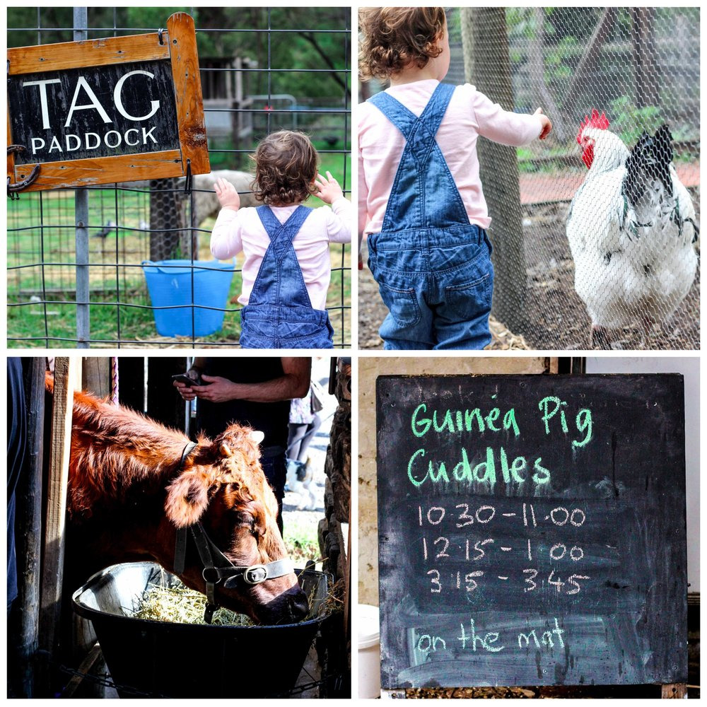 Mamma Knows North - Collingwood Childrens Farm