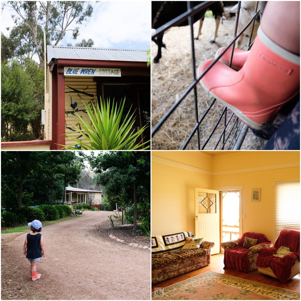 fawcett farmstay cottages, alexandra - mamma knows north