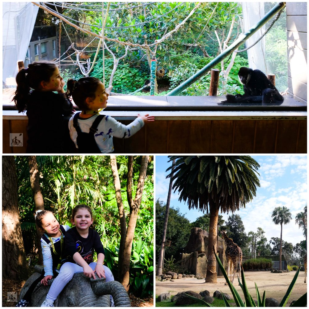 melbourne zoo, parkville - mamma knows north