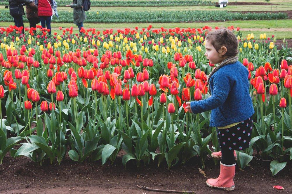 tesseler tulip festival - mamma knows north