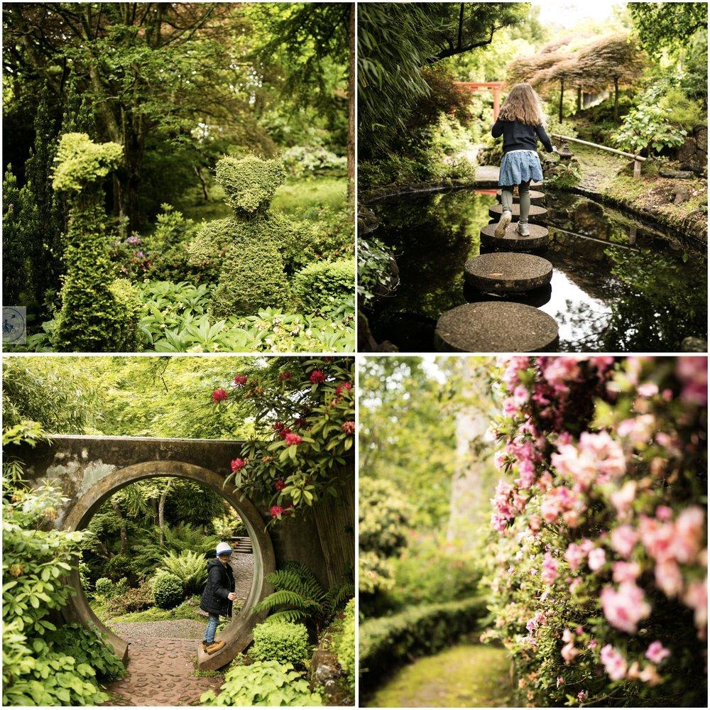 forest glade 2.jpg