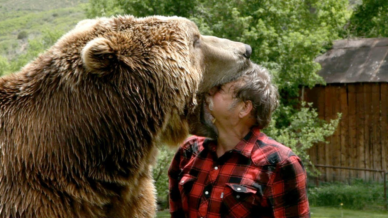 improve-my-writing-skills-bear-attack