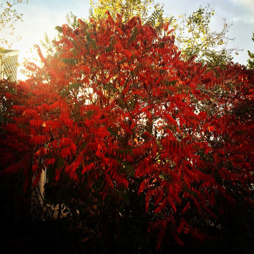 falltreeamber
