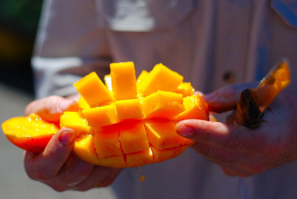costa rica mango.jpg
