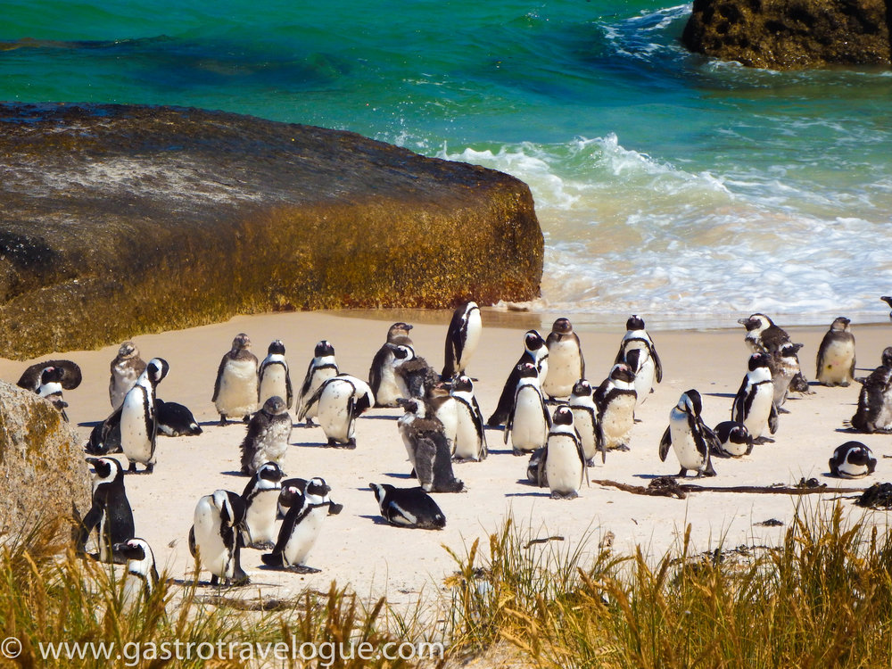 6 Spectacular Places You Must Visit In South Africa: A Local's Perspective. Penguins at Boulder's Beach, Cape Town.