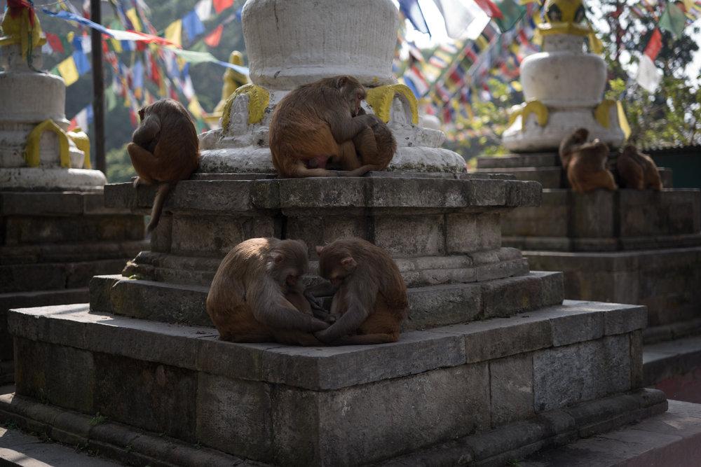 Nepal_Phill O'Leary_14_20181004-L1009498.jpg