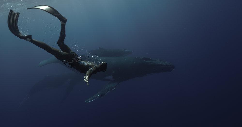 Freediving Sydney
