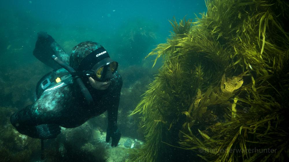 Freediving, Sydney, Australia, training Freedive, breath-hold, learn to Freedive,