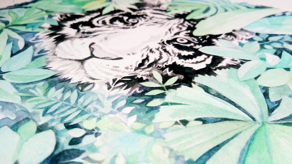 tiger-watercolor-illustration-progress-commission.PNG