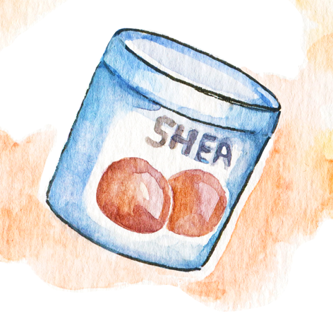 favorites-illustration-shea-butter-beauty.PNG