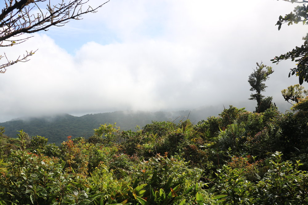 A view from the lookout point near the trailhead that once led to the breeding pools of the Golden Toad.