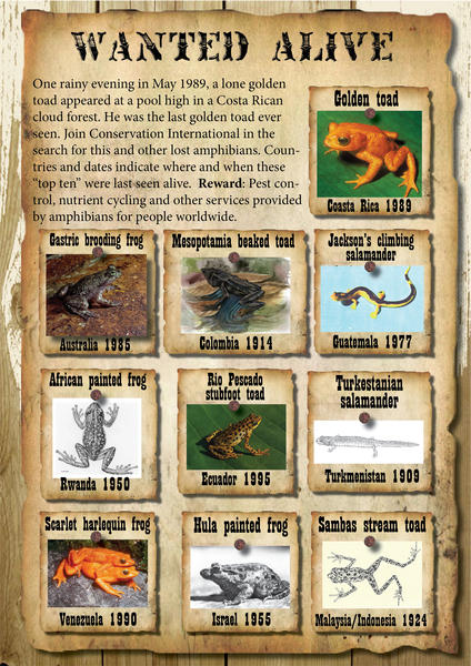 The 'Wanted Alive' poster from Conservation International's Search for Lost Frogs campaign, with the Golden Toad listed as #1.