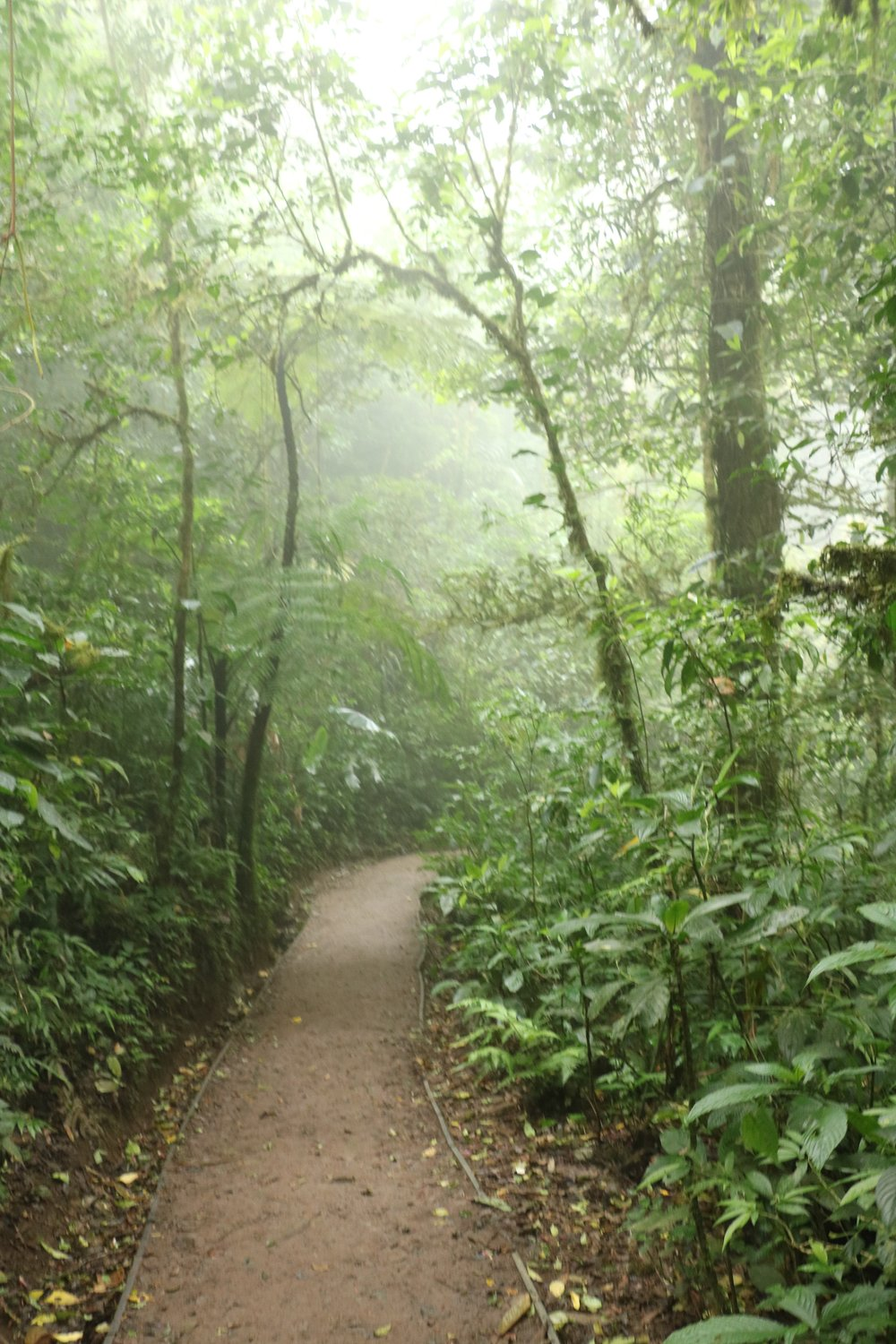 One of the public trails snaking through the Cloud Forest Reserve