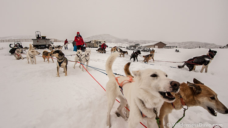 The-Sled-Dogs-Were-Just-as-Eager-as-Us.jpg