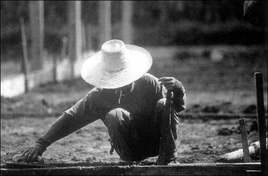 Thailand Black and White