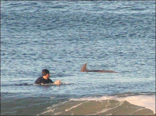 A surfer, making sure it's a dolphin