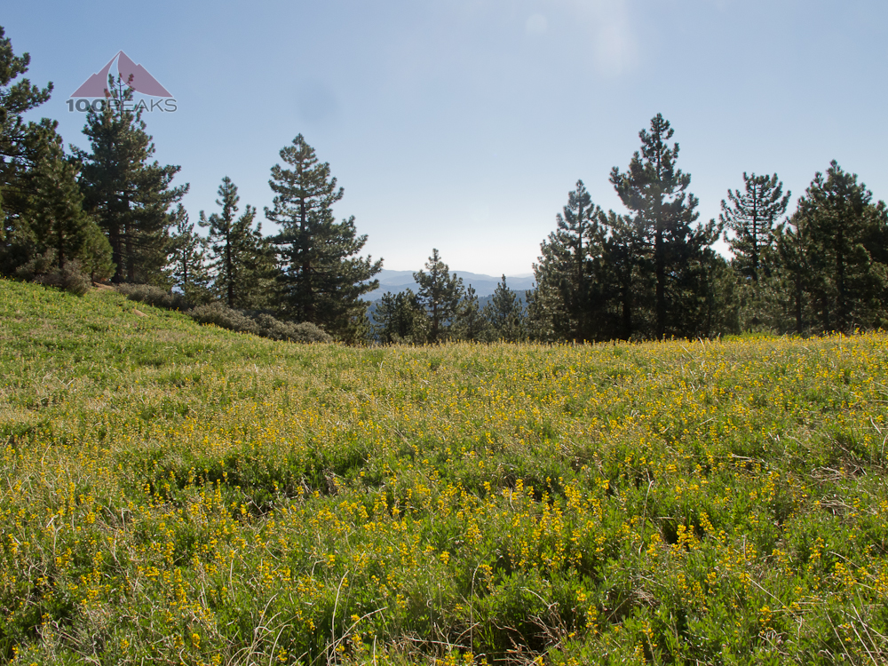 Flower Field near Reyes Peak