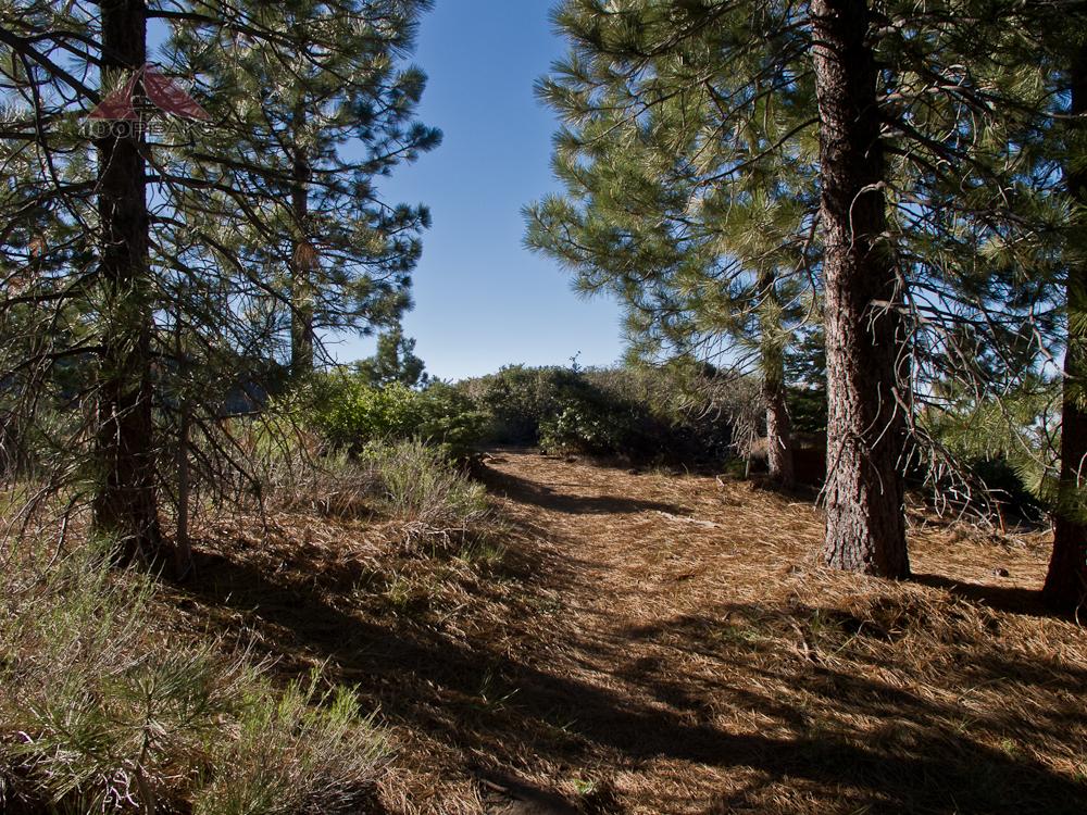 Reyes Peak Trail