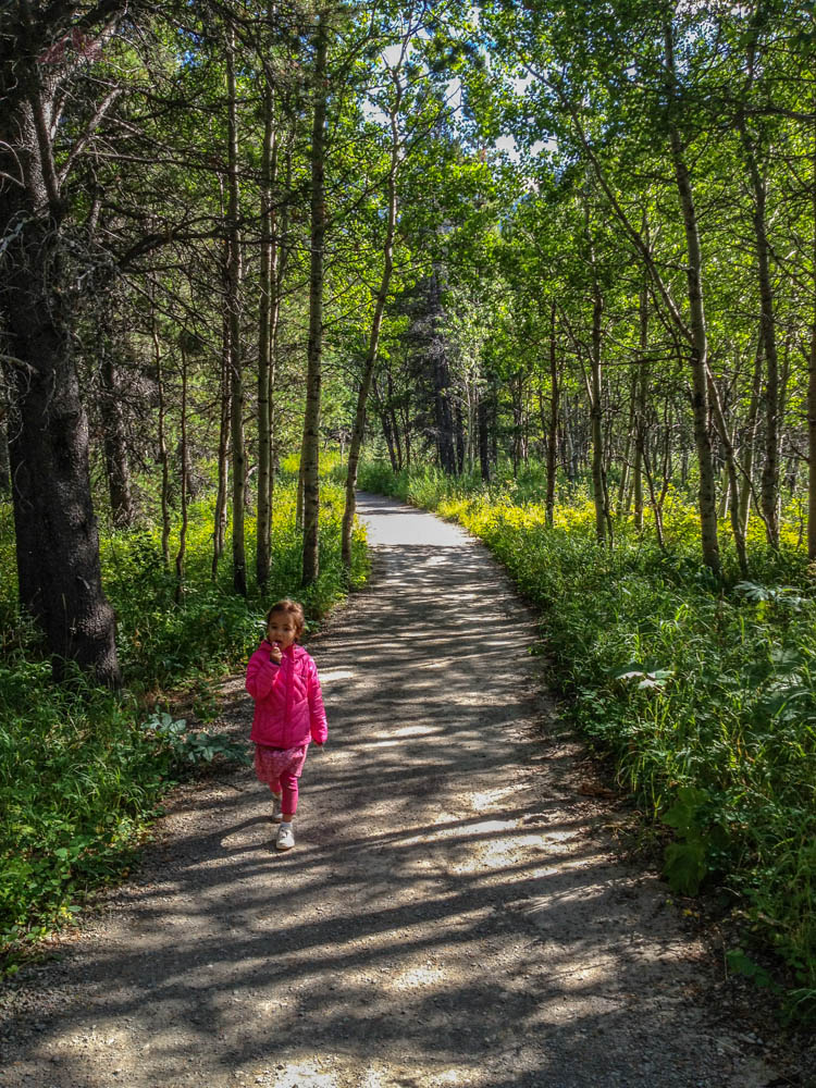 Soph along the Swiftcurrent Lake Loop Trail