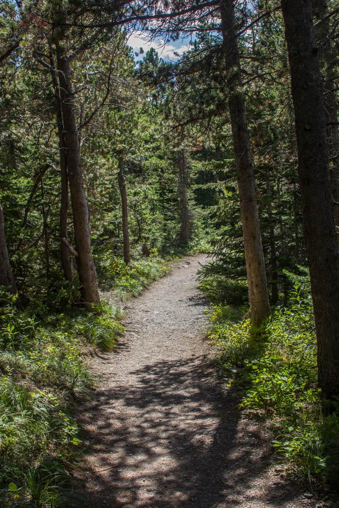 Swiftcurrent Lake Loop Trail