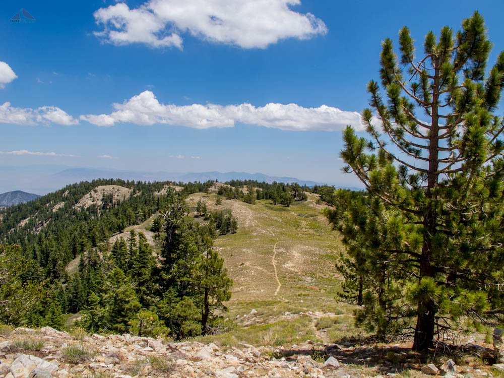 Side Trail from Mount Pinos