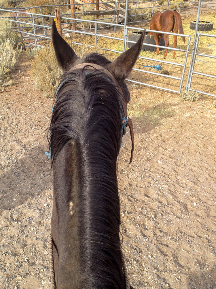 Charlie, my ride