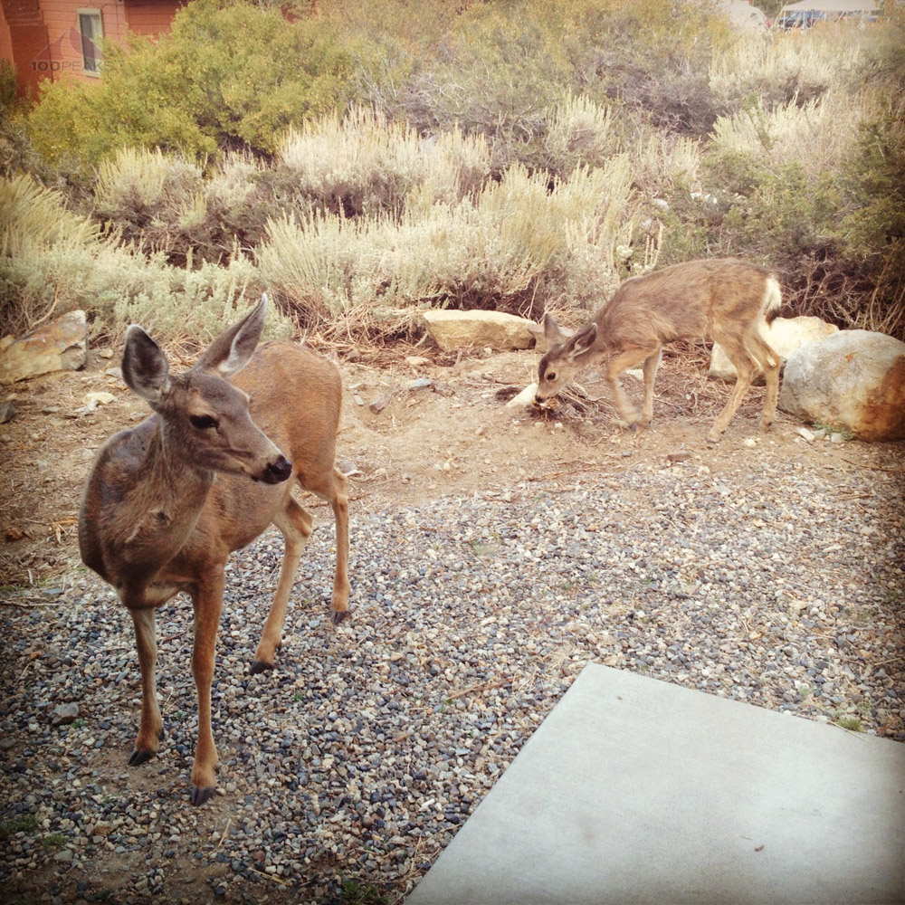 Deer outside our cabin
