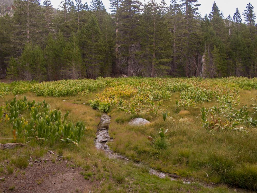 Meadow at Little Round Valley, just below San Jacinto Peak
