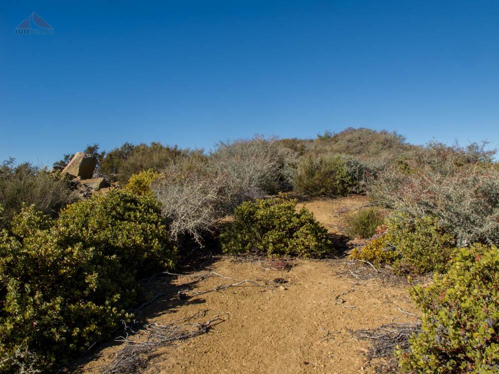 Overgrown Trail on Dry Lakes Ridge