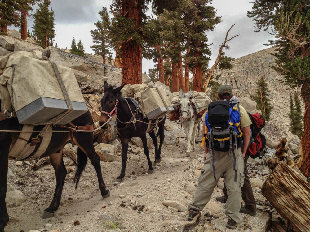 Pack Train on the Pacific Crest Trail