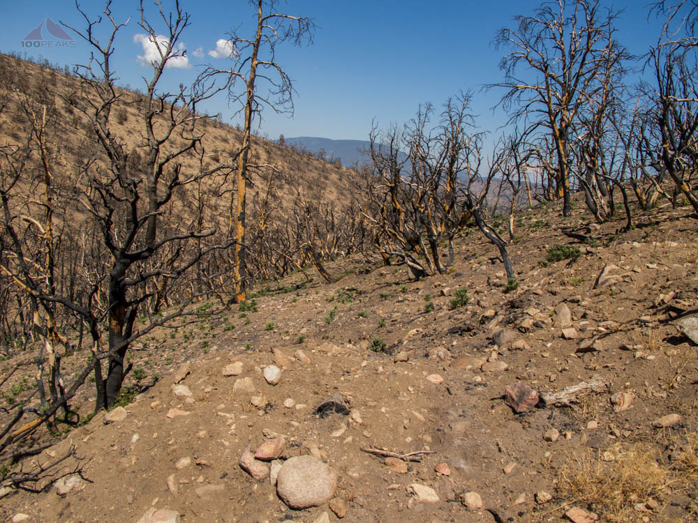Trace of the Lockwood Fire on the way to San Guillermo Mountain